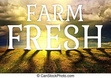 fogalom, major terep, friss, mezőgazdaság, táj