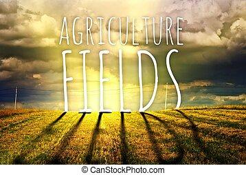 fogalom, tanya, megfog, mező, mezőgazdaság, táj