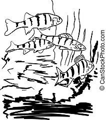 folyó, fish