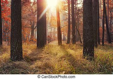 forest., ősz, bámulatos, arany-