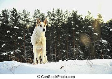 forest., tél, kutya