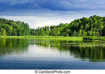 forest., tó