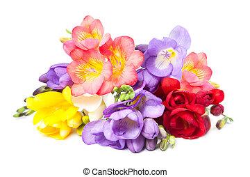 freesia, virágzó