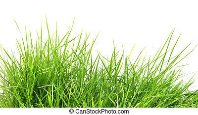 friss, eredet, fű, zöld