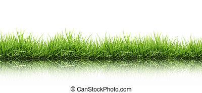 friss, fű, zöld, elszigetelt, eredet