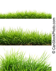 friss, fű, zöld, eredet