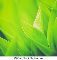 friss, közelkép, fű, zöld