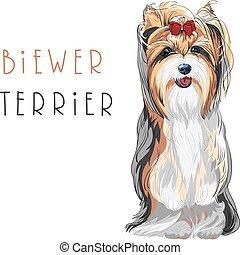 furcsa, ülés, biewer, kutya, yorkshire, vektor, terrier
