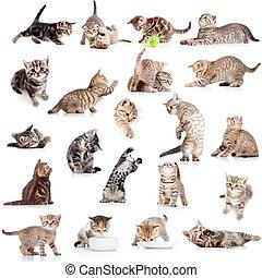furcsa, elszigetelt, gyűjtés, macska, vidám, háttér, cica, fehér
