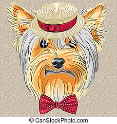 furcsa, kutya, yorkshire, vektor, csípőre szabott, terrier, karikatúra