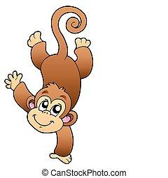 furcsa, majom, csinos