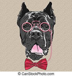 furcsa, sétabot, kutya, vektor, csípőre szabott, corso, karikatúra