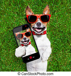 furcsa, selfie, kutya