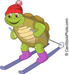 furcsa, skiing., turtle.