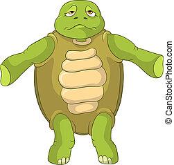 furcsa, turtle., confusion.