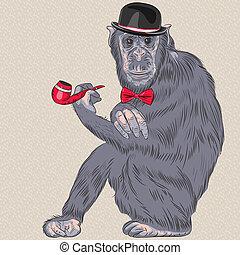 furcsa, vektor, csípőre szabott, karikatúra, majom