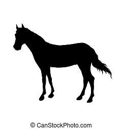 futás, black ló, silhouette.