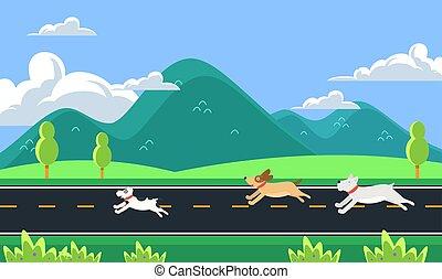 futás, kutyák, reggel, út