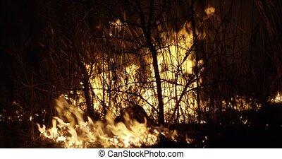 futótűz, smoke., night., égető, erdő