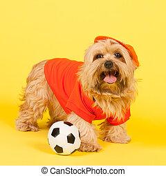 futball, kutya, holland