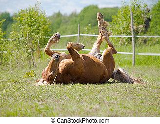 gördülő, ló