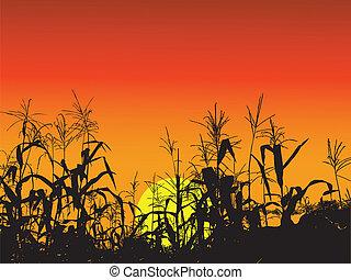 gabonaszem, levél növényen, háttér