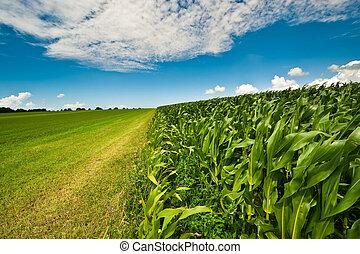 gabonaszem, nyár, farmland
