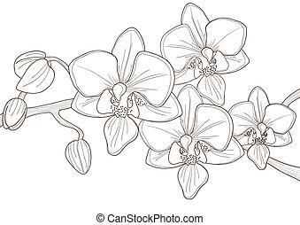 gally, orhidea