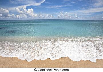 gally, tengerpart, fehér, üres, lenget