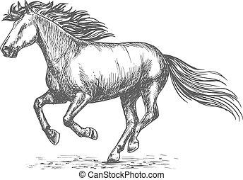 galoppozó, sport, lóverseny, ló, fehér, erős