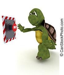 gombolódik tol, teknősbéka