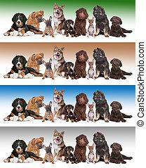 gradiens, háttér, különböző, csoport, kutyus