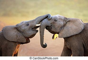 (greeting), elefántok, szelíden, megható, más, mindegyik