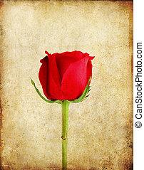 grunge, dolgozat, öreg, háttér, piros rózsa