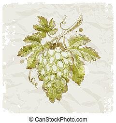 grunge, szőlő, szüret, -, ábra, kéz, dolgozat, vektor, háttér, húzott, csokor