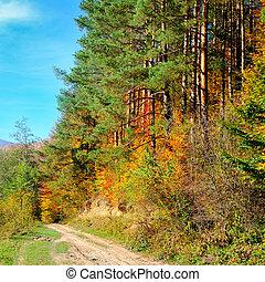 gyönyörű, ősz erdő, táj, nap, öntvény, küllők, fény, át, bitófák