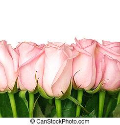 gyönyörű, agancsrózsák, határ