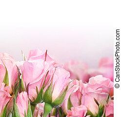 gyönyörű, agancsrózsák