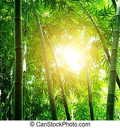 gyönyörű, bambusz erdő