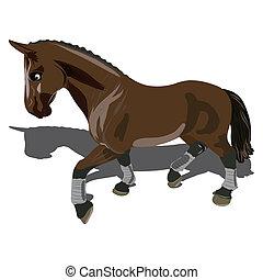 gyönyörű, barna ló