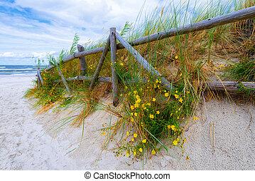 gyönyörű, belépés, lengyelország, tenger, falu, lubiatowo, balti, tengerpart, homokos