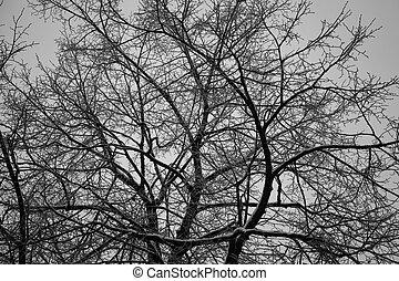 gyönyörű, branches., fa., fa, struktúra, csupasz, erdő, háttér, félhomály, sző