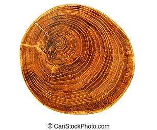 gyönyörű, elvág, fa