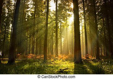 gyönyörű, erdő
