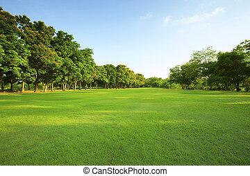 gyönyörű, fény, liget, reggel, mező, zöld fű, közönség