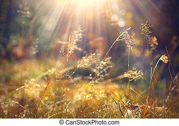 gyönyörű, fű, természet, fény, reggel, ősz, háttér., closeup, nap, harmat
