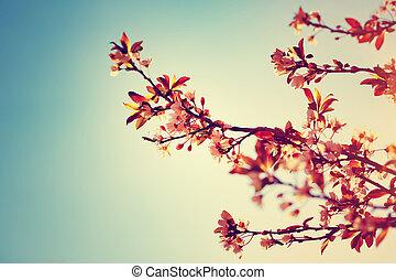 gyönyörű, fa, határ, virágzó