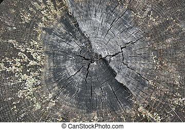 gyönyörű, fa, szelet, öreg, törzs