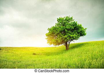 gyönyörű, fa, tölgy, zöld terep