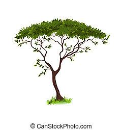 gyönyörű, fa, tervezés, -e